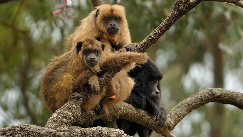 Córdoba: el fuego entró a una reserva de monos carayá – Diario Federal
